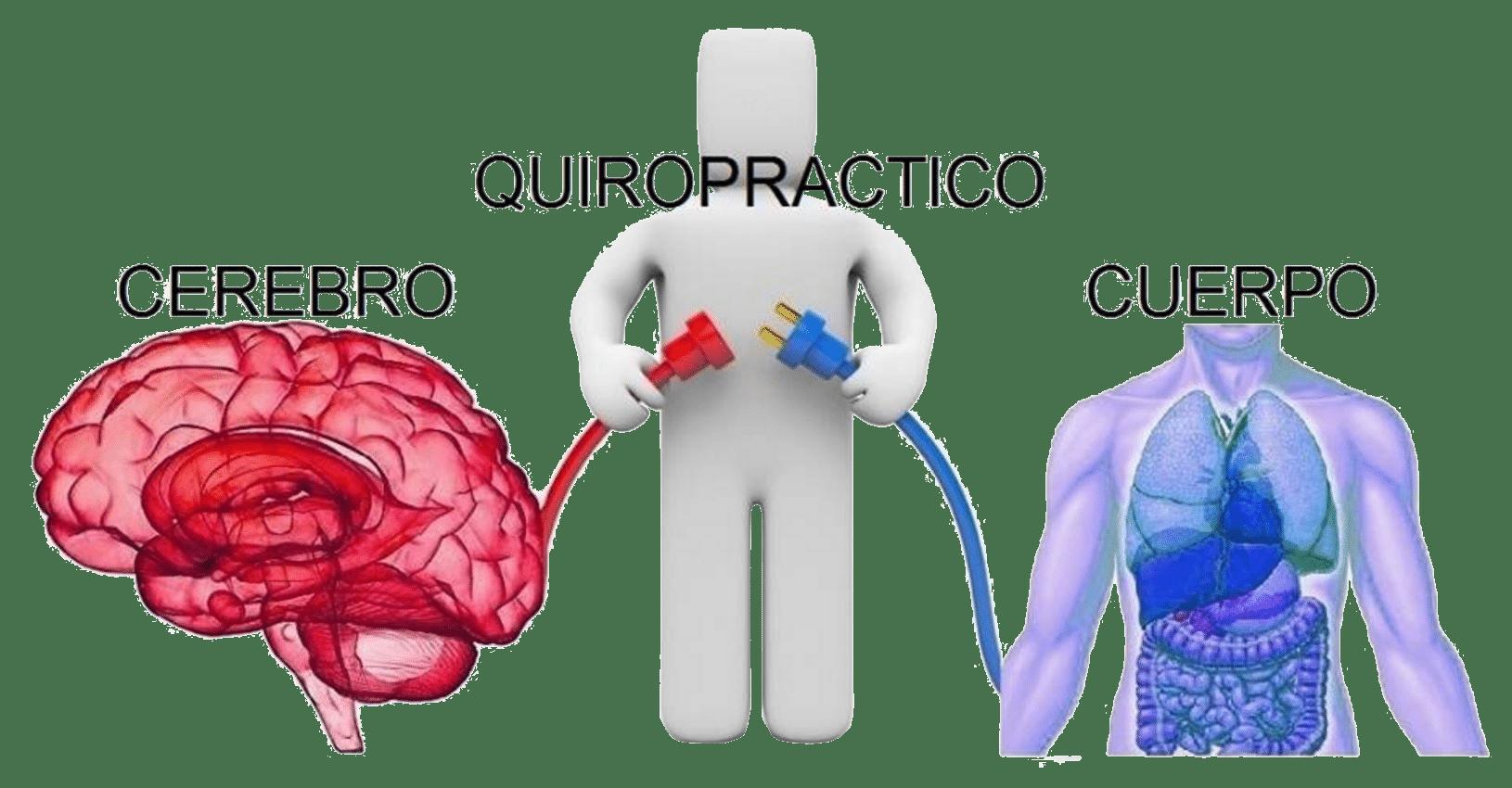 El puente entre el cerebro y el cuerpo - Quiropráctica Blog